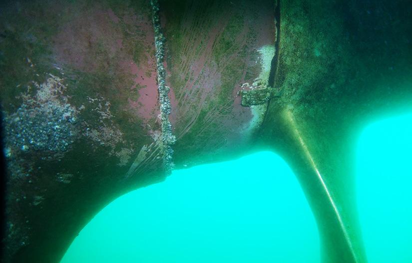 Bio fouling survey on vessel