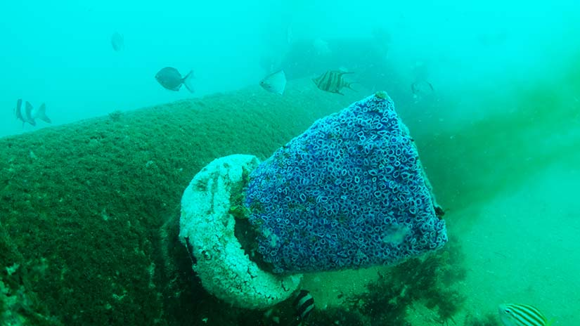 Outfall pipe and marine life