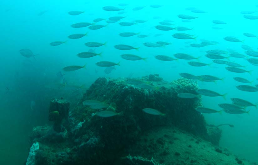 Outfall pipe and school of fish