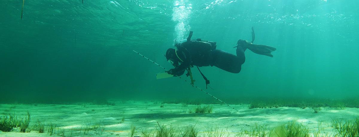 Scientific Diver undertaking maritime survey