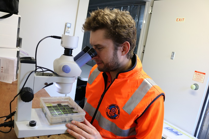 Marine Scientists examining settlement plate