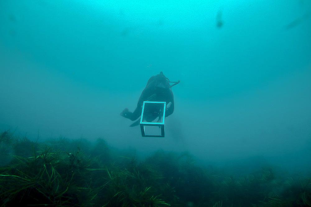 Scientific Diver studying inshore reef