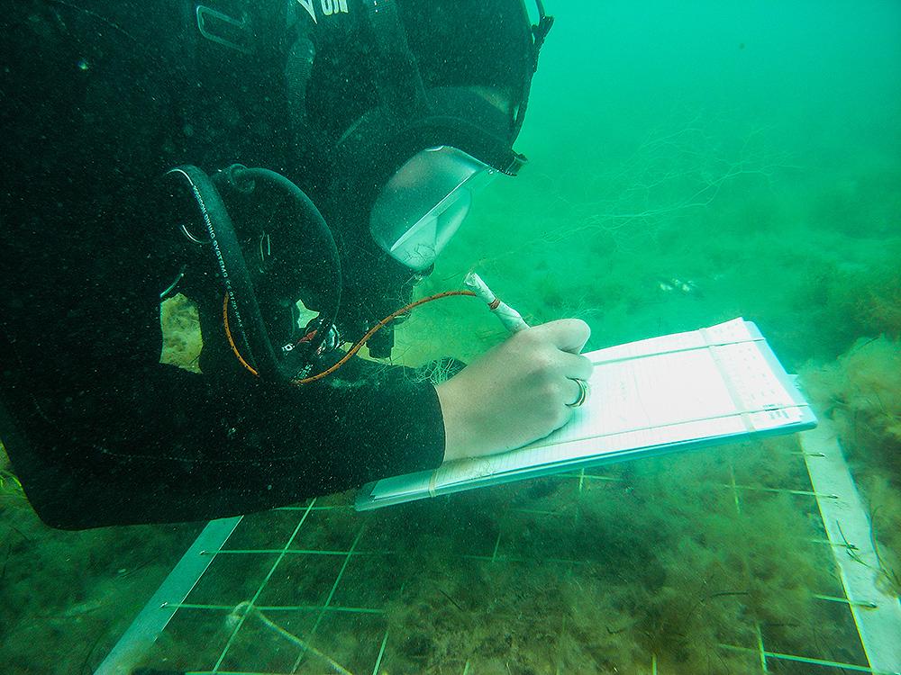 Scientific Diver Grid Survey
