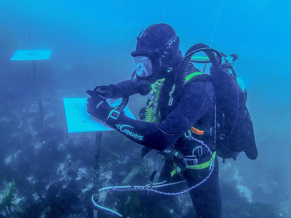 Scientific diver monitoring desalination plant plate